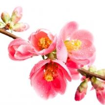 flower-گل (236)