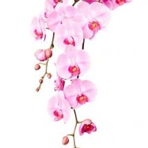 flower-گل (24)