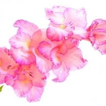 flower-گل (242)