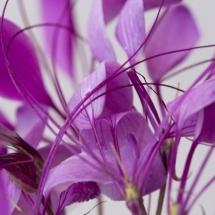 flower-گل (245)