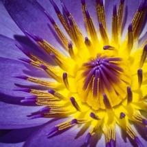 flower-گل (247)