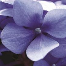 flower-گل (248)