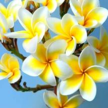 flower-گل (249)