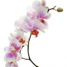 flower-گل (25)
