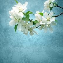 flower-گل (250)