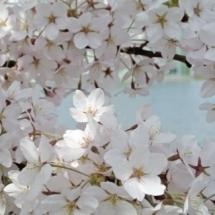 flower-گل (251)