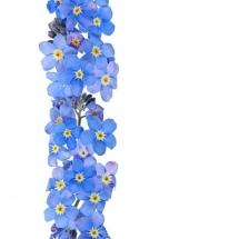 flower-گل (252)