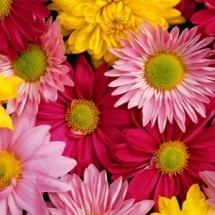 flower-گل (253)