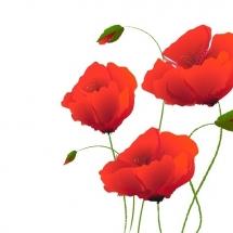 flower-گل (256)