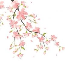 flower-گل (257)