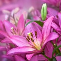 flower-گل (258)