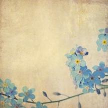 flower-گل (259)