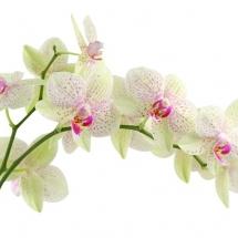 flower-گل (26)