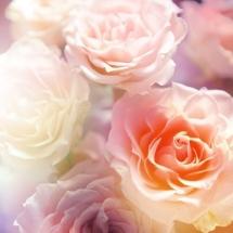 flower-گل (261)