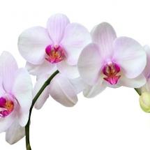 flower-گل (262)