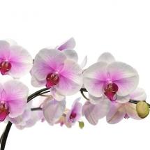 flower-گل (264)