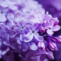 flower-گل (265)
