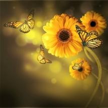 flower-گل (266)