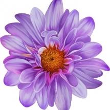 flower-گل (267)