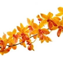 flower-گل (27)
