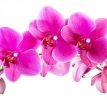 flower-گل (270)