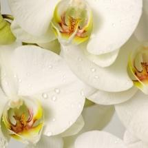 flower-گل (272)