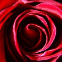 flower-گل (274)