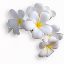 flower-گل (275)