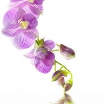 flower-گل (277)