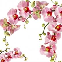 flower-گل (28)