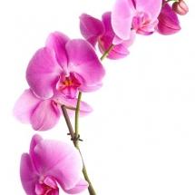 flower-گل (281)