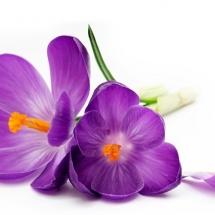flower-گل (283)
