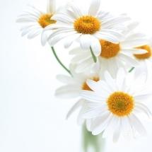 flower-گل (284)