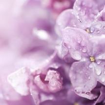 flower-گل (286)