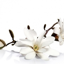 flower-گل (287)