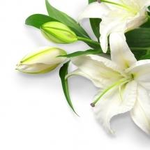 flower-گل (288)