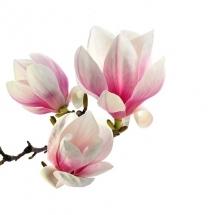 flower-گل (289)