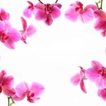 flower-گل (29)