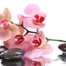 flower-گل (290)