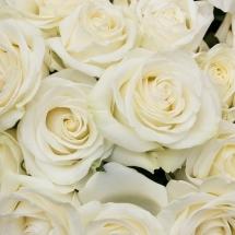 flower-گل (291)
