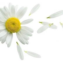 flower-گل (293)