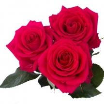 flower-گل (294)