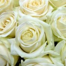 flower-گل (295)