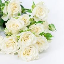 flower-گل (296)