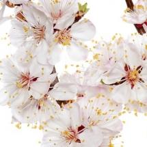 flower-گل (297)