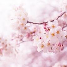 flower-گل (298)