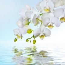 flower-گل (299)