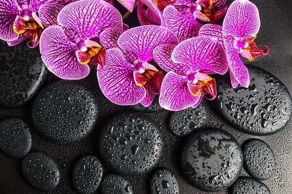 تصاویر گل و گیاه