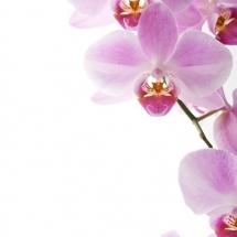 flower-گل (30)
