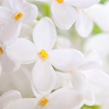 flower-گل (300)